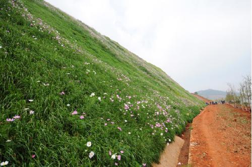 四川边坡绿化用草种选择及其使用原则,确定不了解一下吗
