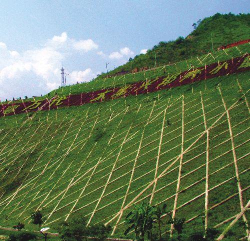 适合四川边坡绿化的草品种有哪些?