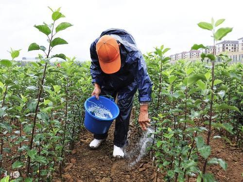 正确使用四川大量元素水溶肥,要施肥掌握这四点