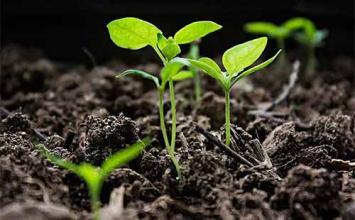 四川大量元素水溶肥厂家为您介绍冬季大棚蔬菜施肥技术