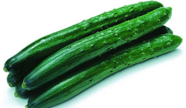 黃瓜供應批發