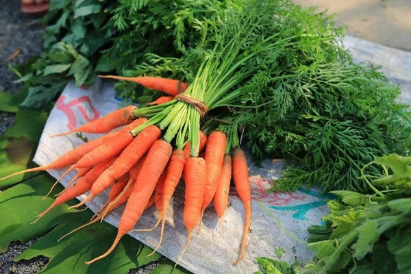 蔬菜采購一周行情分析(2020.05.23— —2020.05.29)