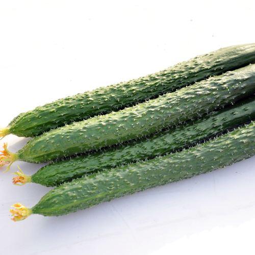 黃瓜摘葉的時間和黃瓜摘葉的方法