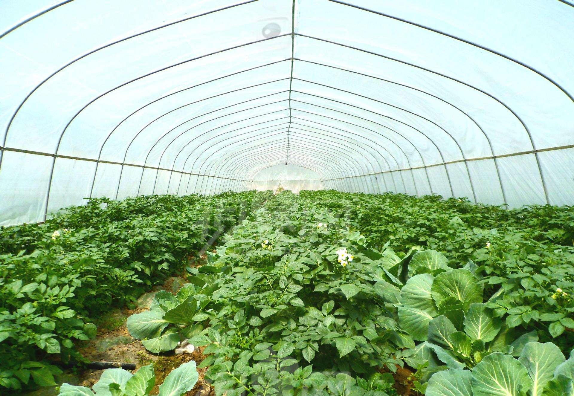 聊城:蔬菜大棚里的致富發財路