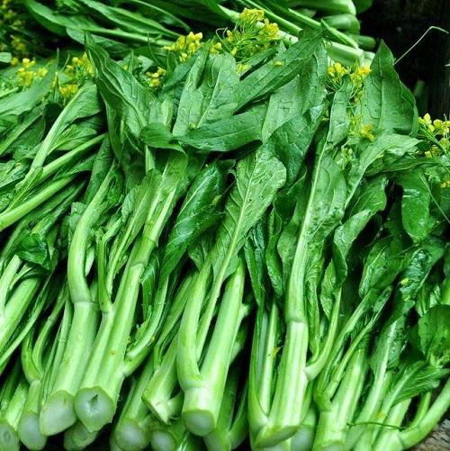 菜心批發分享菜心栽培的品種