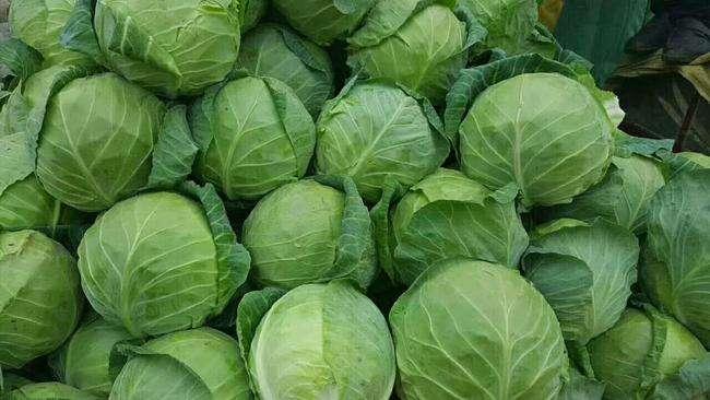卷心菜的種植時間和方法總結。