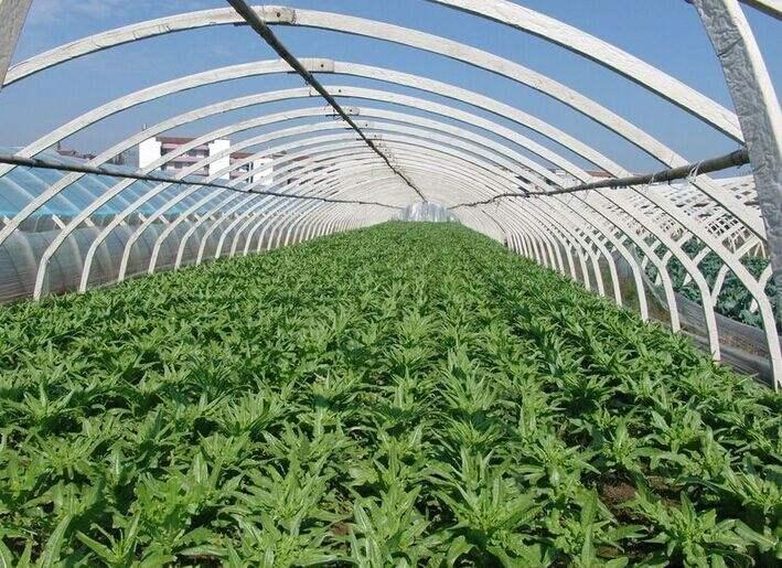 夏季,立夏后注意防范大棚蔬菜高溫方法