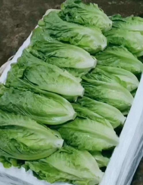 熱烈祝賀:云南順興精品系列葉菜入駐孟氏鴻園農業有限公司