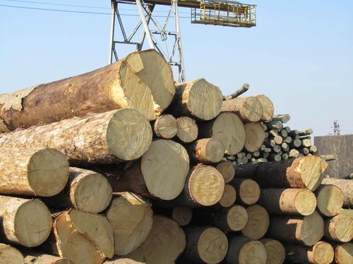 导致宜昌木材变质的因素