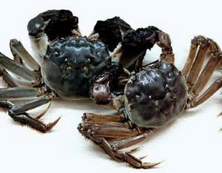 梁子湖大闸蟹