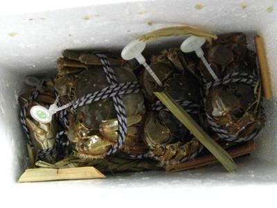 怎么优雅的吃掉一只蟹?
