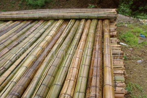 做好這些,你的赤水楠竹質量一定是非常棒的