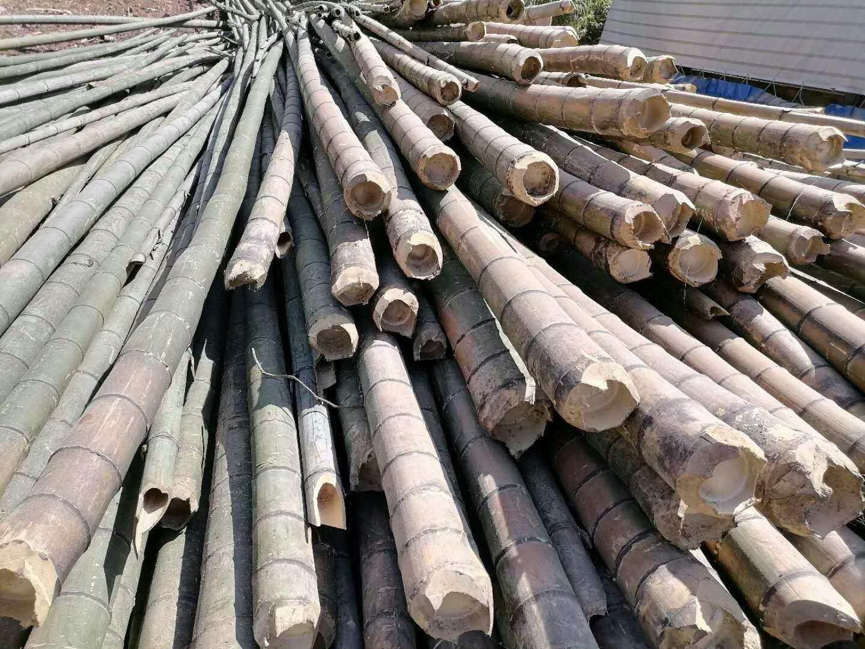 貴州赤水楠竹價格