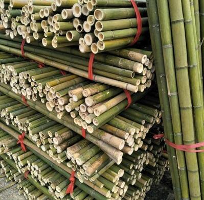 親們,貴州..的赤水楠竹,居然不是本地的,快看