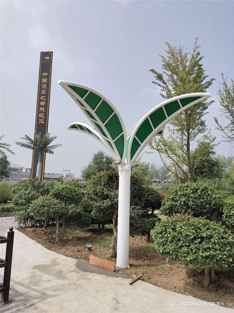 茯茶镇茶树景观