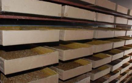 木盒养殖湖北黄粉虫的话,有什么优点呢?
