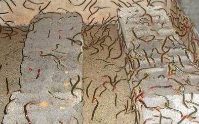 冬季对于蜈蚣的生长环境条件进行改善的话,有这4个好处!