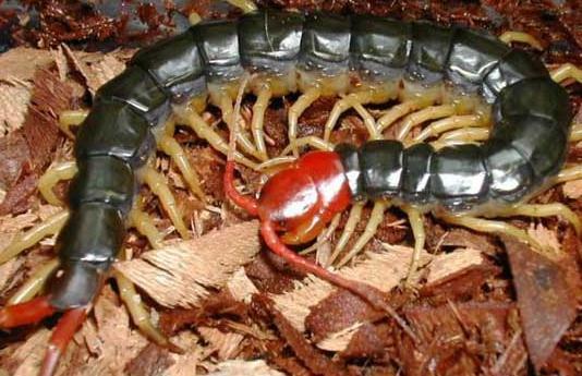 大家是用什么方法來養殖蜈蚣的呢?這3種大家使用過嗎?