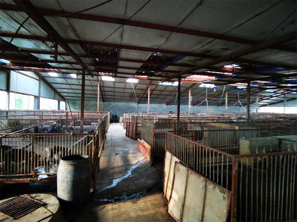怀来绿轩苑(古农)养殖专业有限公司厂区_河北藏香猪厂家