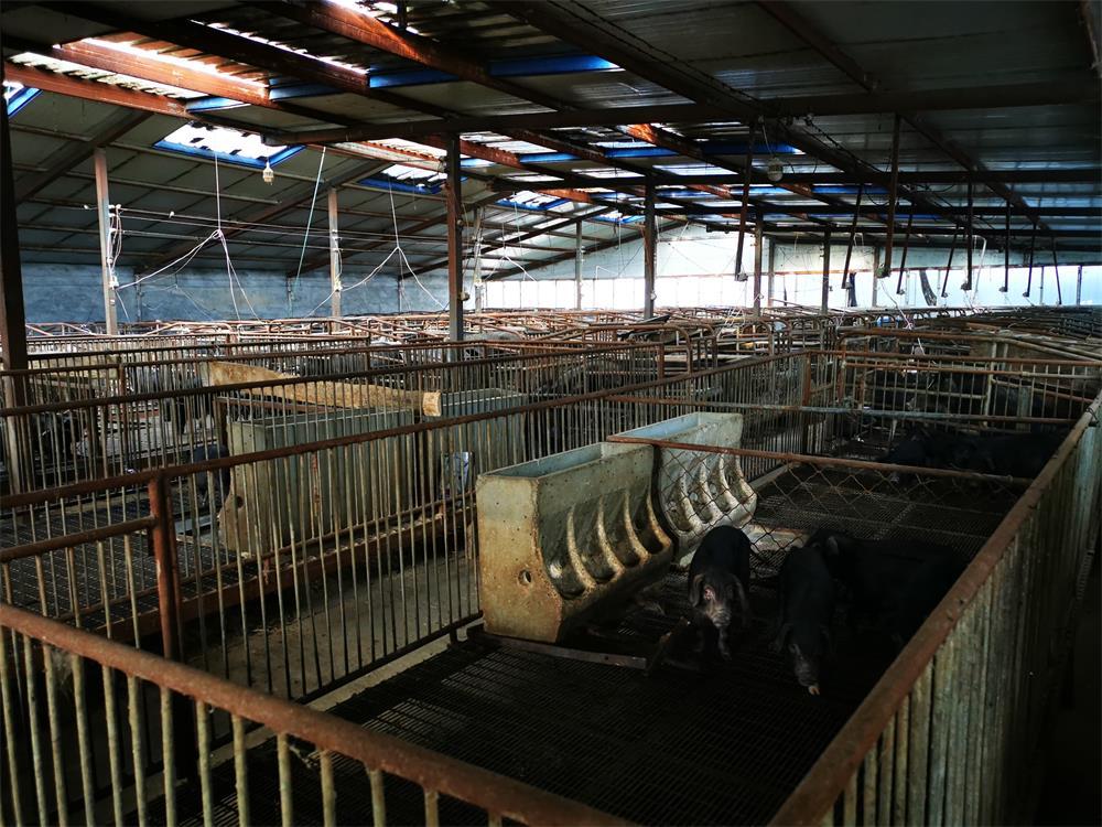 绿轩苑(古农)养殖厂区_张家口生态猪厂家