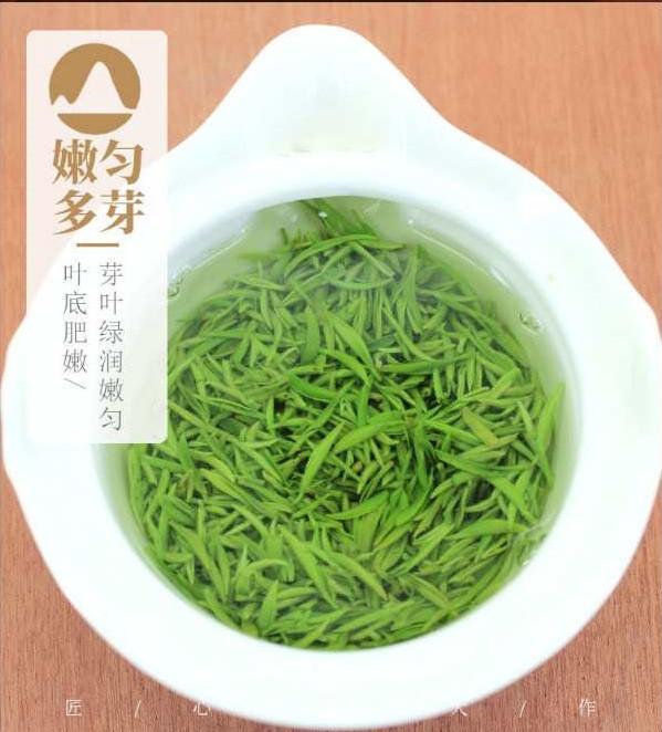 信阳大山茶