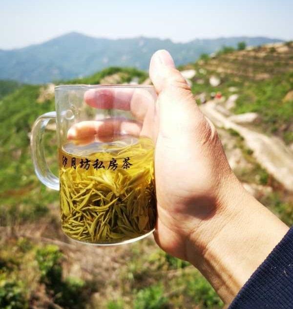 信阳高山茶销售案例