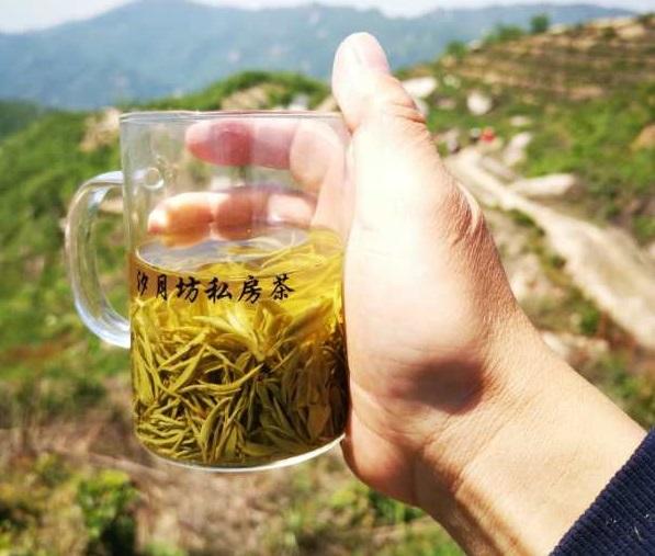 信阳大山茶加工