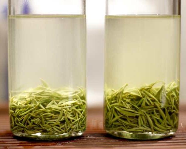 毛尖到底属于什么茶你知道吗?这些知识要了解