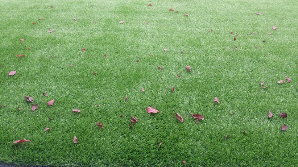 洛阳人造草坪足球场