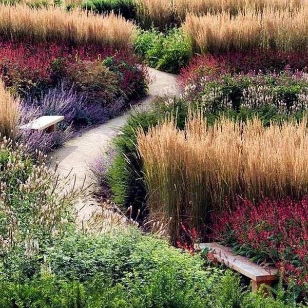 河南休闲景观草