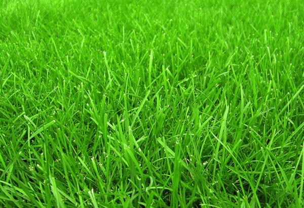 河南人造草坪