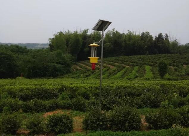 太阳能杀虫灯的出现受到了广大茶农的欢迎!