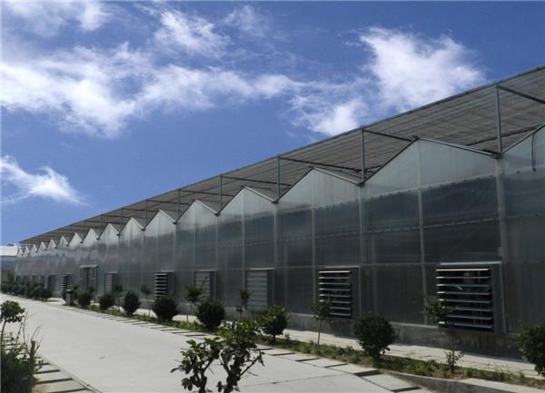 河南阳光板温室搭建