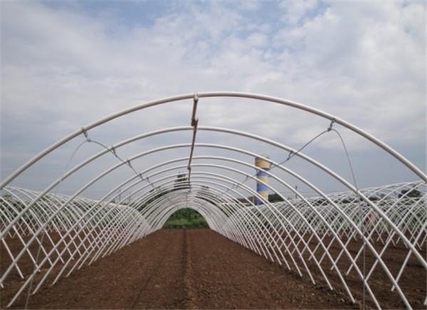 扎地拱棚薄膜温室施工