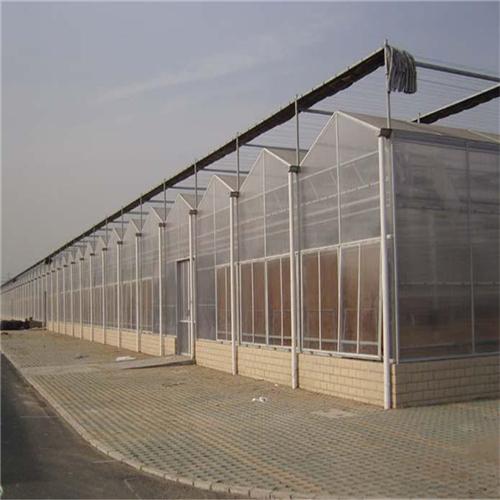 蔬菜薄膜温室厂家