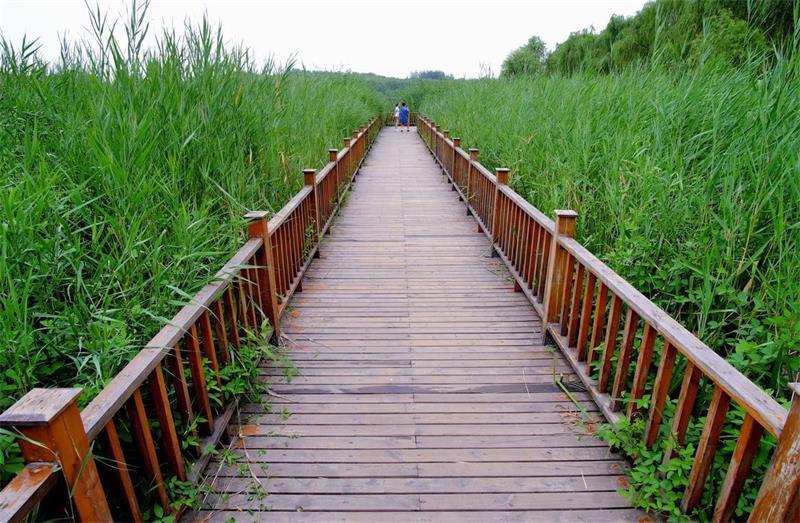 要保护环境的我们的选择四川防腐木修建房屋