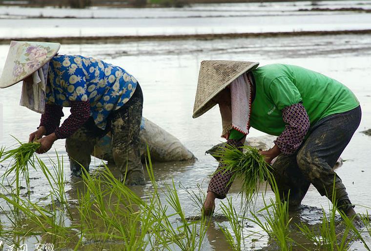 安徽南陵抢种忙,放眼望去的农田,已经恢复了往日的热闹