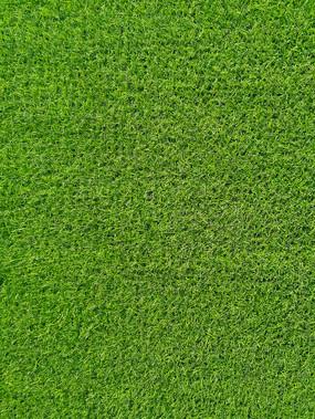 四川人造草坪的种类有哪些?看完你就知道