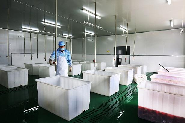 公司生产基地展示
