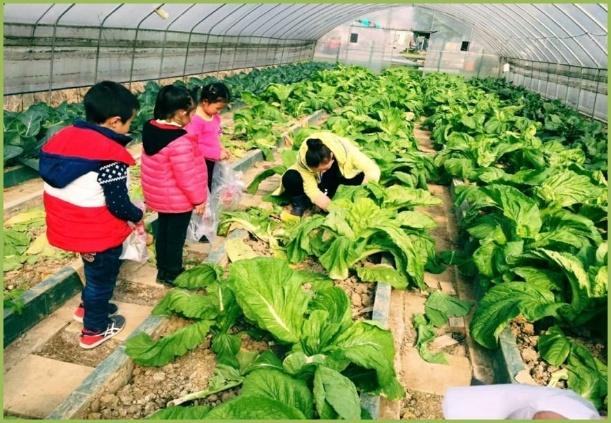 涿鹿景泰豪庭菜园
