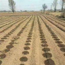 节水灌溉的滴灌系统是由什么组成的?
