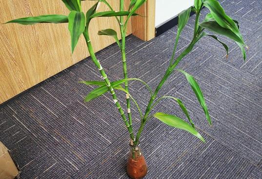 关于办公室水培植物的养护,你想了解的都在这里