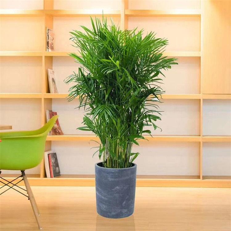 西安写字楼绿植租赁