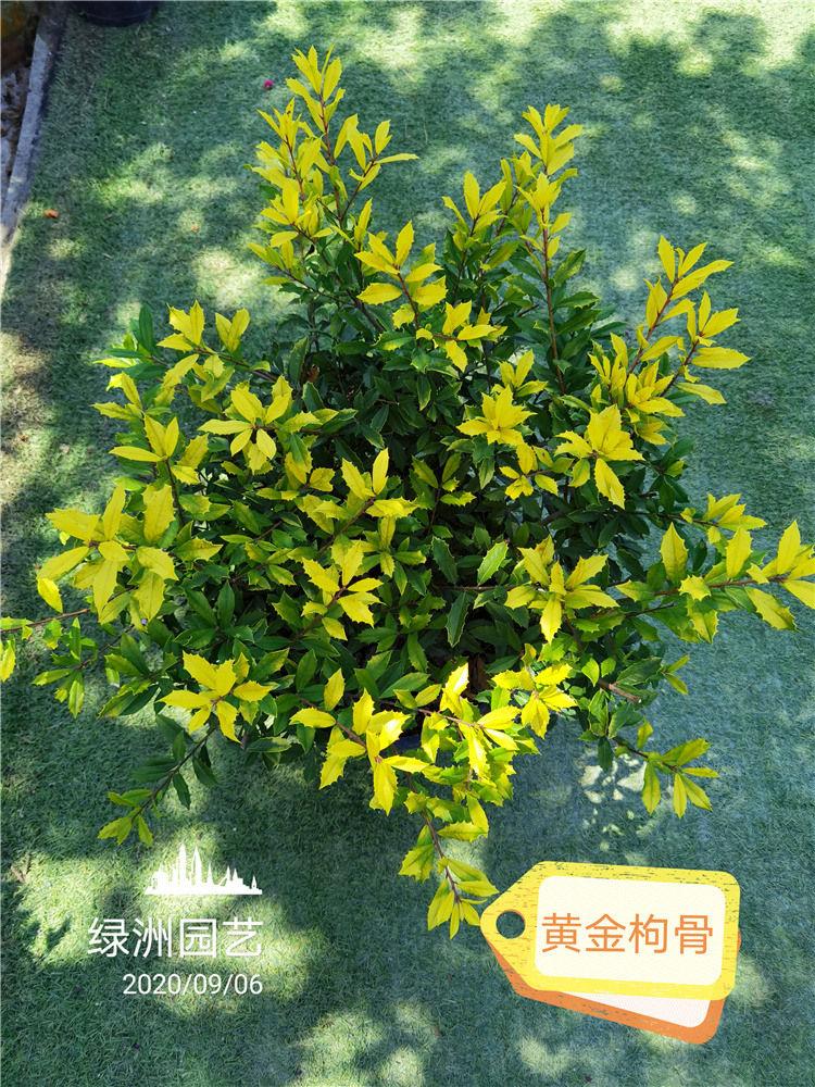 基地绿植展示