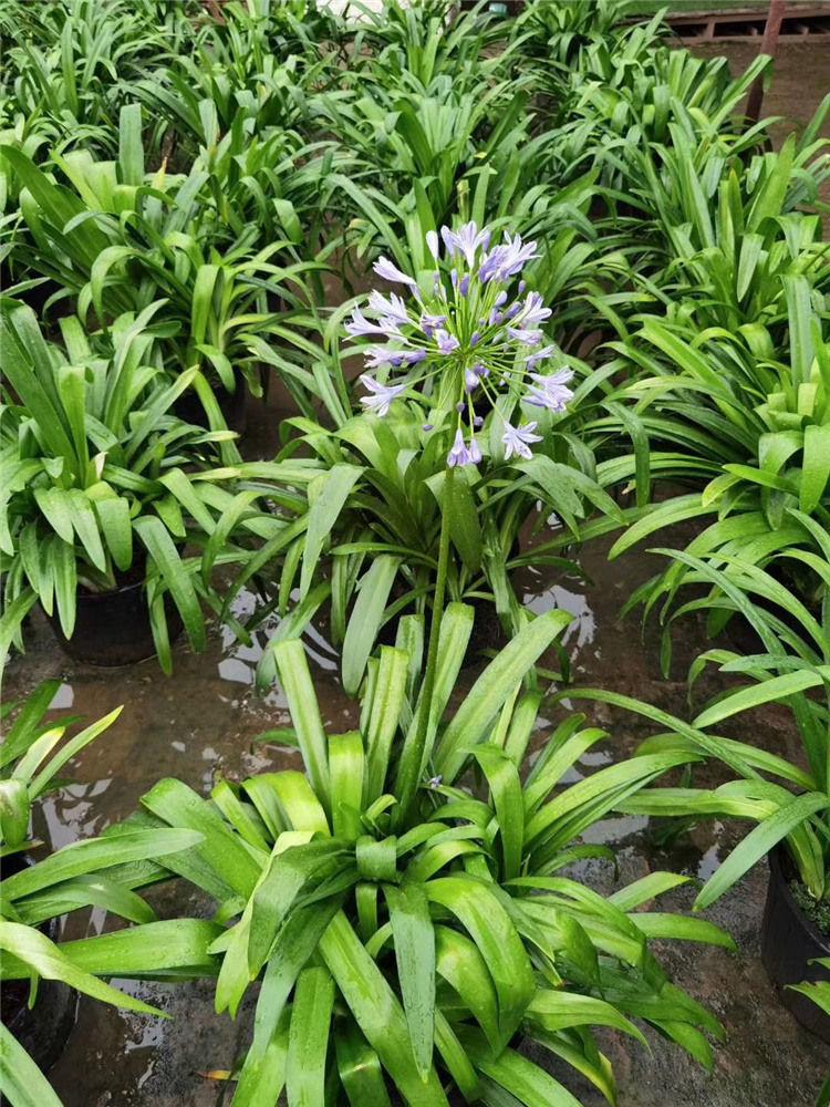 今天西安绿植盆栽租赁厂家小编告诉你哪些绿植容易存活呢