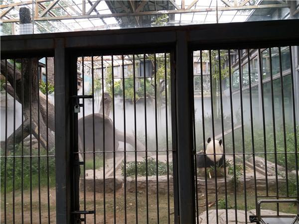 北京动物园做的景观喷雾