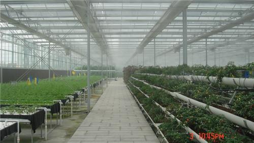 花卉养殖大棚