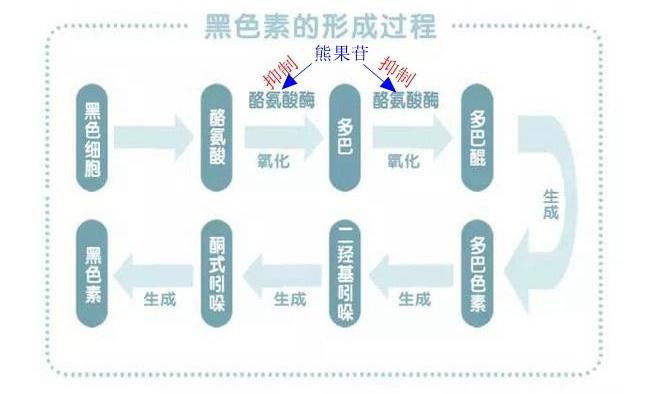 讲解α-熊果苷与β-熊果苷的区别