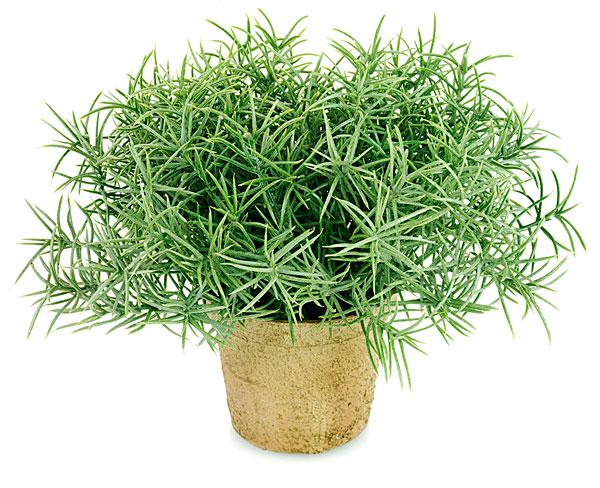 植物提取物、天然草药防腐剂解决方案