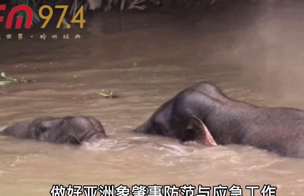 """15头大象北上的40多天:""""肇事""""412起,或将继续向北"""
